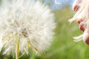 blowing-dandelion-000039176530_medium